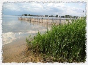 Summer 2013 Rental Season on Long Beach Island NJ