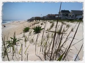 Dune Grass Planting on Long Beach Island New Jersey