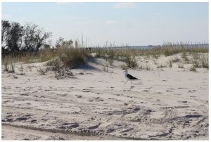 Changes to LBI New Jersey