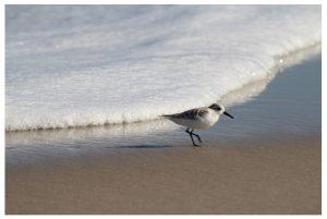 Long Beach Island Bayside Single-Family Home Sales Update