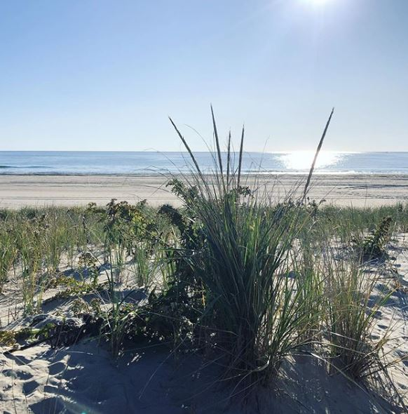 LBI Real Estate New and Active Listings in 2020